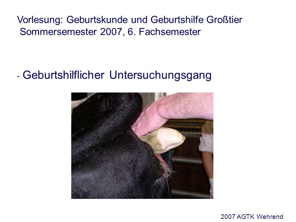 Die geburtshilfliche Untersuchung Lage (Situs) Verhältnis der Längsachse des Fetus zur Längsachse des Muttertieres Unterscheide: - Längslagen - Vorderendlagen (VEL) - Hinterendlagen (HEL) 2007 AGTK Wehrend