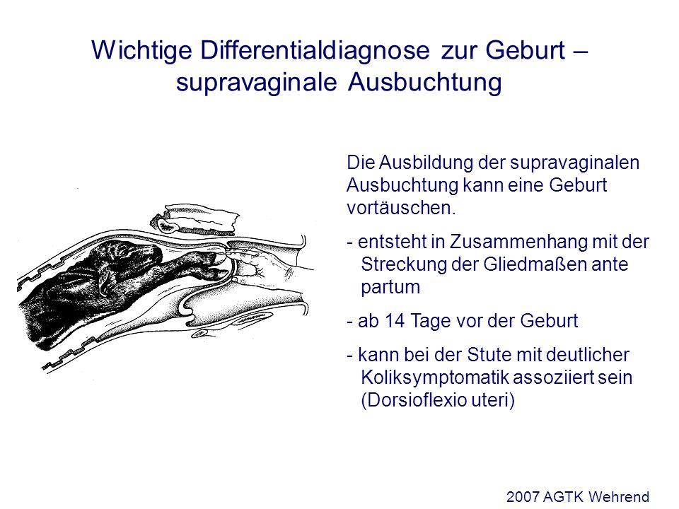 Die Ausbildung der supravaginalen Ausbuchtung kann eine Geburt vortäuschen. - entsteht in Zusammenhang mit der Streckung der Gliedmaßen ante partum -