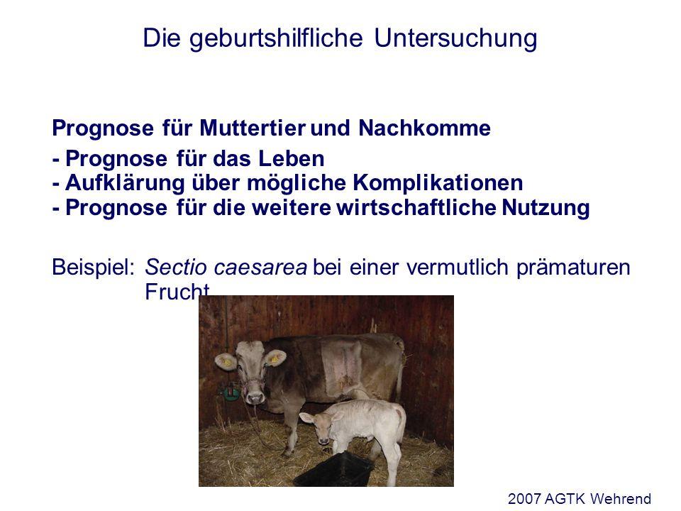 Die geburtshilfliche Untersuchung Prognose für Muttertier und Nachkomme - Prognose für das Leben - Aufklärung über mögliche Komplikationen - Prognose