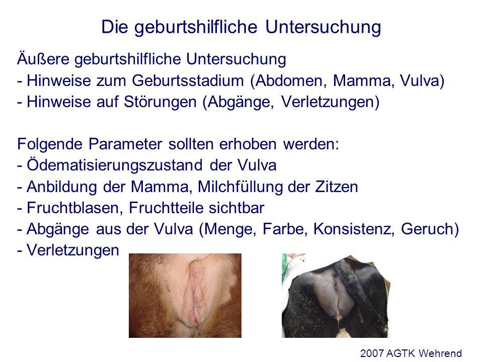 Die geburtshilfliche Untersuchung Stellung (Positio) Verhältnis des Rückens des Fetus zum Rücken des Muttertieres Unterscheide: obere, untere linke und rechte seitliche Stellung Rind: obere Stellung Stute: obere Stellung kl.