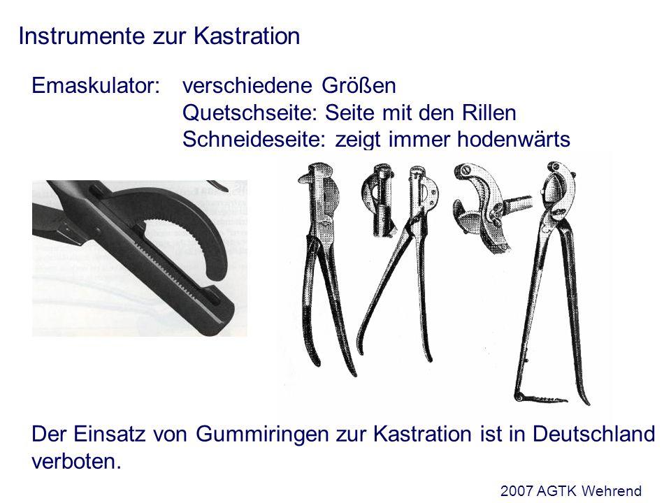 Instrumente zur Kastration Emaskulator: verschiedene Größen Quetschseite: Seite mit den Rillen Schneideseite: zeigt immer hodenwärts Der Einsatz von Gummiringen zur Kastration ist in Deutschland verboten.