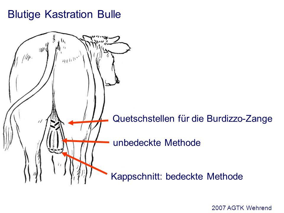 Blutige Kastration Bulle Kappschnitt: bedeckte Methode unbedeckte Methode Quetschstellen für die Burdizzo-Zange 2007 AGTK Wehrend