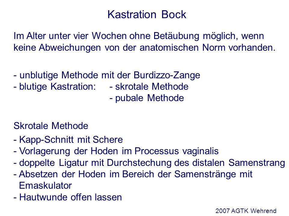 Kastration Bock Im Alter unter vier Wochen ohne Betäubung möglich, wenn keine Abweichungen von der anatomischen Norm vorhanden.
