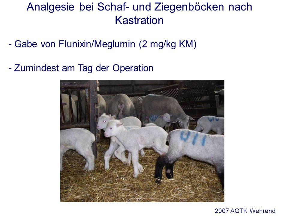 Analgesie bei Schaf- und Ziegenböcken nach Kastration - Gabe von Flunixin/Meglumin (2 mg/kg KM) - Zumindest am Tag der Operation 2007 AGTK Wehrend