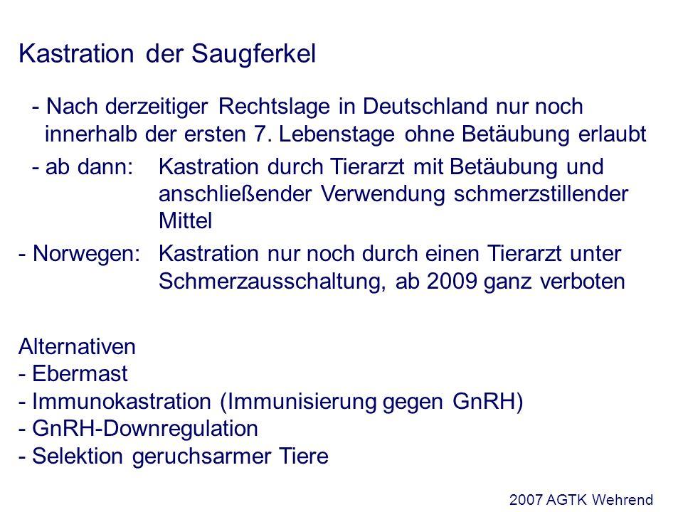 Kastration der Saugferkel - Nach derzeitiger Rechtslage in Deutschland nur noch innerhalb der ersten 7.