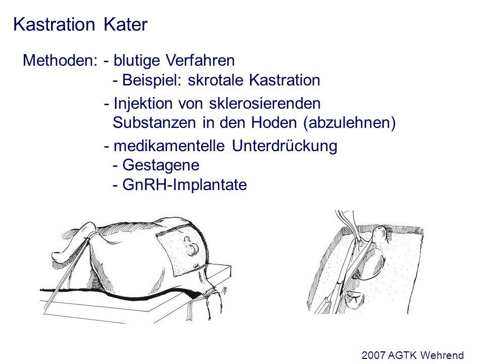 Kastration Kater Methoden: - blutige Verfahren - Beispiel: skrotale Kastration - Injektion von sklerosierenden Substanzen in den Hoden (abzulehnen) - medikamentelle Unterdrückung - Gestagene - GnRH-Implantate 2007 AGTK Wehrend