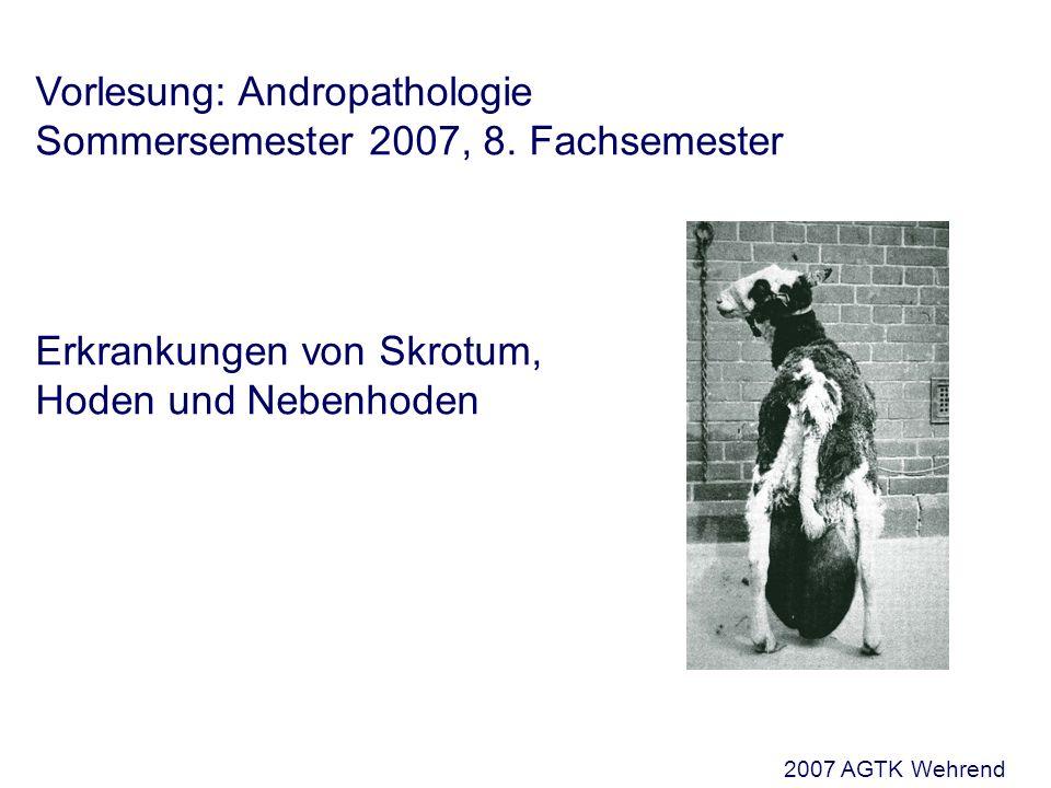Vorlesung: Andropathologie Sommersemester 2007, 8.