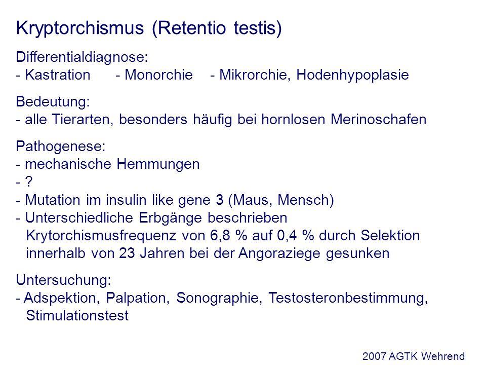 Kryptorchismus (Retentio testis) Differentialdiagnose: - Kastration- Monorchie- Mikrorchie, Hodenhypoplasie Bedeutung: - alle Tierarten, besonders häufig bei hornlosen Merinoschafen Pathogenese: - mechanische Hemmungen - .