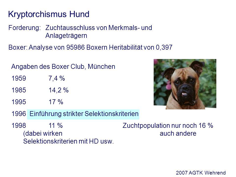 Kryptorchismus Hund Forderung: Zuchtausschluss von Merkmals- und Anlageträgern Boxer: Analyse von 95986 Boxern Heritabilität von 0,397 Angaben des Boxer Club, München 1959 7,4 % 1985 14,2 % 1995 17 % 1996 Einführung strikter Selektionskriterien 1998 11 %Zuchtpopulation nur noch 16 % (dabei wirken auch andere Selektionskriterien mit HD usw.