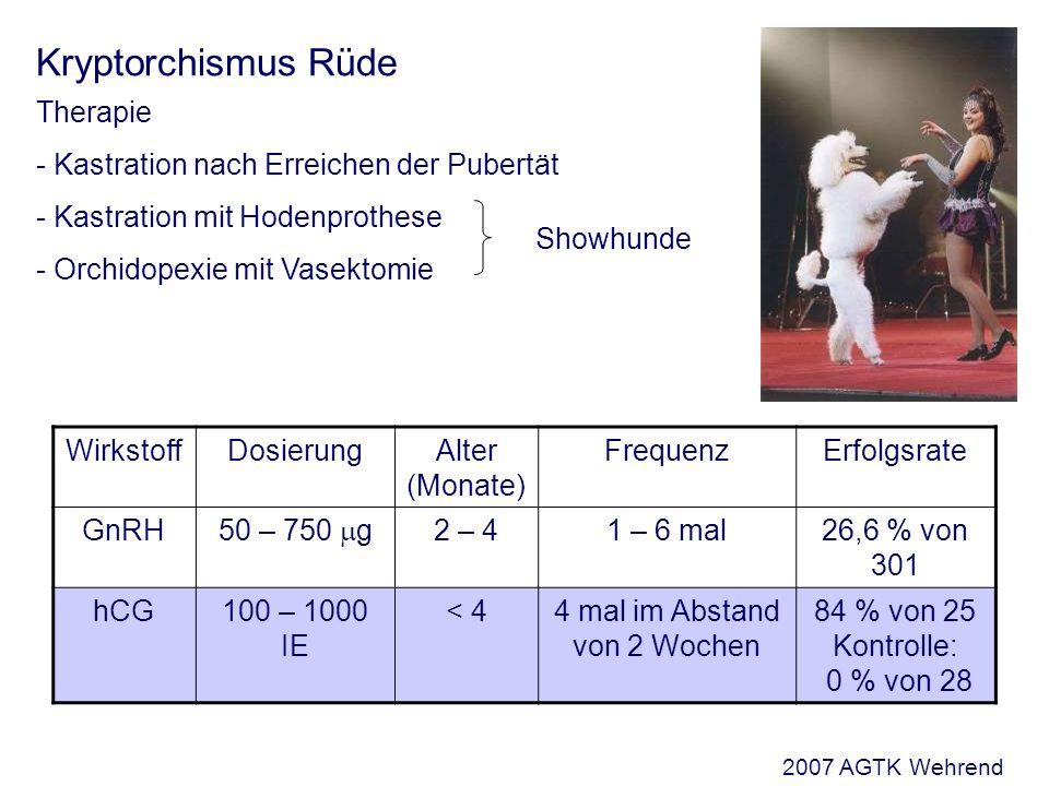 Kryptorchismus Rüde Therapie - Kastration nach Erreichen der Pubertät - Kastration mit Hodenprothese - Orchidopexie mit Vasektomie Showhunde WirkstoffDosierungAlter (Monate) FrequenzErfolgsrate GnRH 50 – 750 g 2 – 41 – 6 mal26,6 % von 301 hCG100 – 1000 IE < 44 mal im Abstand von 2 Wochen 84 % von 25 Kontrolle: 0 % von 28 2007 AGTK Wehrend