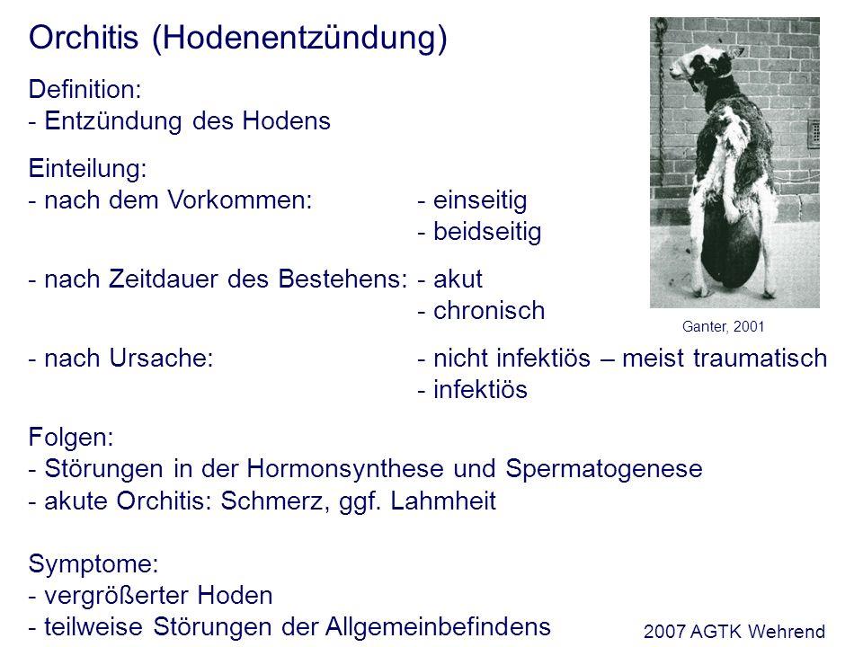 Orchitis (Hodenentzündung) Definition: - Entzündung des Hodens Einteilung: - nach dem Vorkommen:- einseitig - beidseitig - nach Zeitdauer des Bestehens:- akut - chronisch - nach Ursache:- nicht infektiös – meist traumatisch - infektiös Folgen: - Störungen in der Hormonsynthese und Spermatogenese - akute Orchitis: Schmerz, ggf.