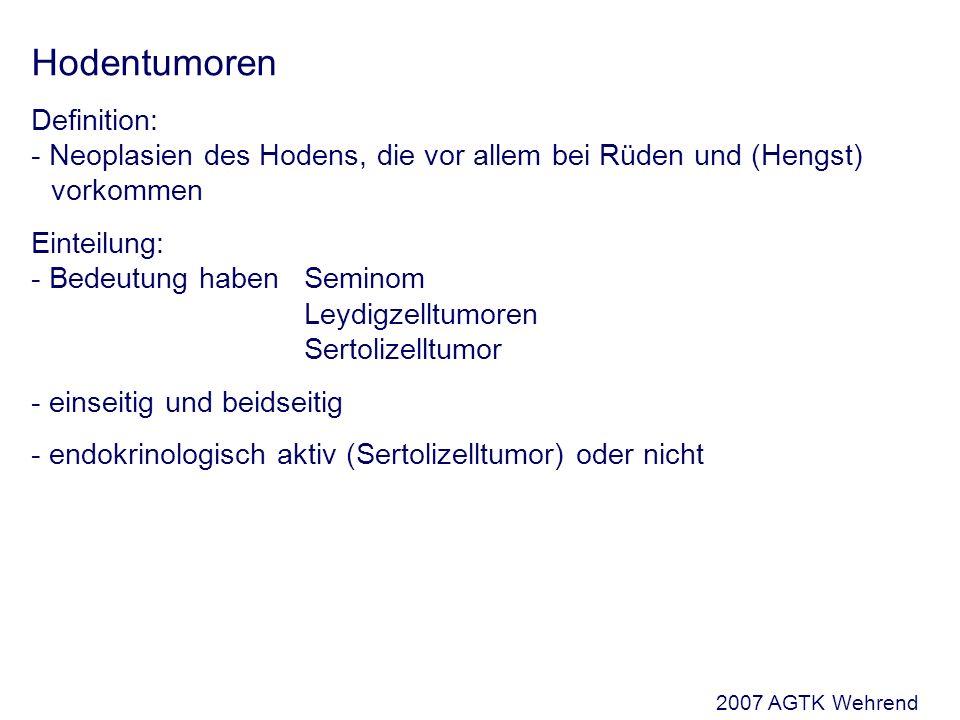 Hodentumoren Definition: - Neoplasien des Hodens, die vor allem bei Rüden und (Hengst) vorkommen Einteilung: - Bedeutung haben Seminom Leydigzelltumoren Sertolizelltumor - einseitig und beidseitig - endokrinologisch aktiv (Sertolizelltumor) oder nicht 2007 AGTK Wehrend