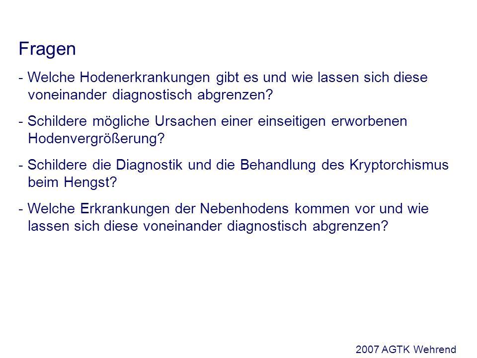 Fragen - Welche Hodenerkrankungen gibt es und wie lassen sich diese voneinander diagnostisch abgrenzen.