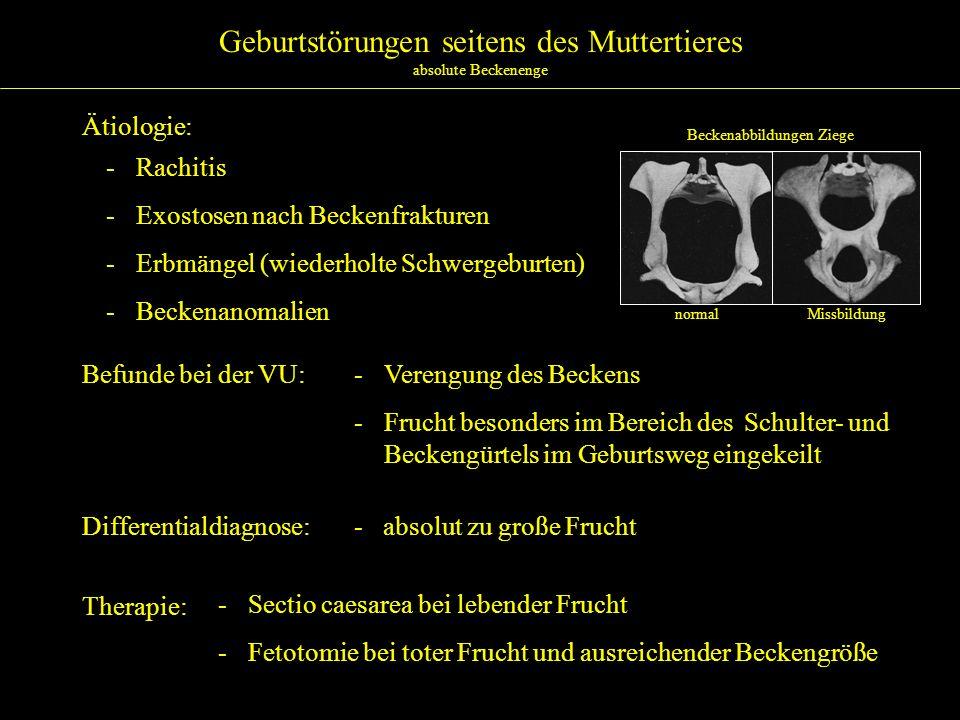 Geburtstörungen seitens des Muttertieres absolute Beckenenge Ätiologie: - Rachitis - Exostosen nach Beckenfrakturen - Erbmängel (wiederholte Schwergeb
