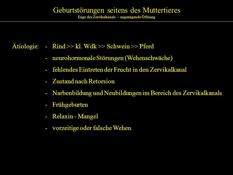 Geburtstörungen seitens des Muttertieres Enge des Zervikalkanals – ungenügende Öffnung Ätiologie:- Rind >> kl. Wdk >> Schwein >> Pferd - neurohormonal