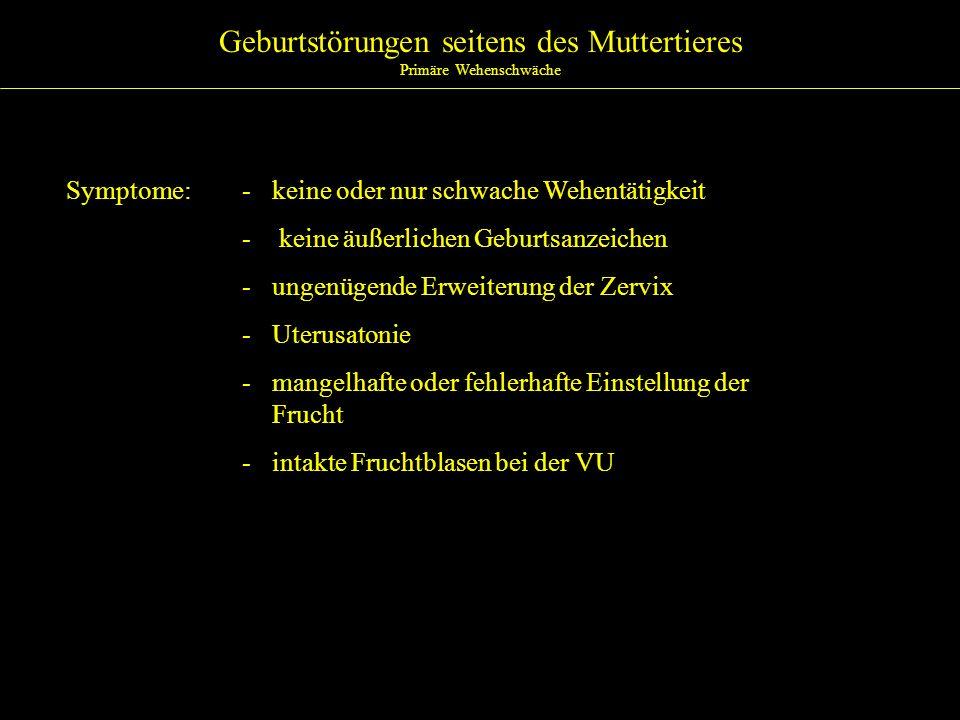 Geburtstörungen seitens des Muttertieres Scheidenvorfall Ätiologie:- Hochträchtigkeit - hormonale Imbalancen - Überladung des Uterus (Zwillinge) - übermäßiger intraabdominaler Druck - zunehmende Anzahl von Geburten - unstillbares Pressen nach Scheidenverletzungen/-entzündungen - Prolapsus nach Transporten - Neigung zur Fetteinlagerung im Becken - Aufnahme phytöstrogener Futtermittel - fehlendes elastisches Gewebe im Becken