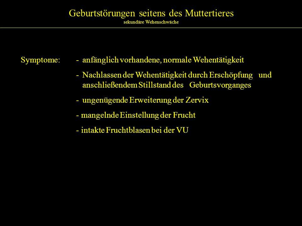 Geburtstörungen seitens des Muttertieres sekundäre Wehenschwäche Ätiologie:- Schwein >> Rind >> Pferd - besonders bei Lage-, Stellungs-, Haltungsanomalien, absolut zu großen Früchten, Mißbildungen sowie verschleppten Geburten - Ermüdung der Muskulatur (Bauchpresse, Uterusatonie)