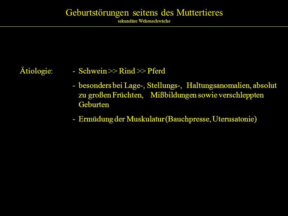 Geburtstörungen seitens des Muttertieres sekundäre Wehenschwäche Therapie:- Auszug der Frucht/Früchte - Ursache der Wehenschwäche beseitigen (L-,S-,H-Anomalien etc.) und anschl.