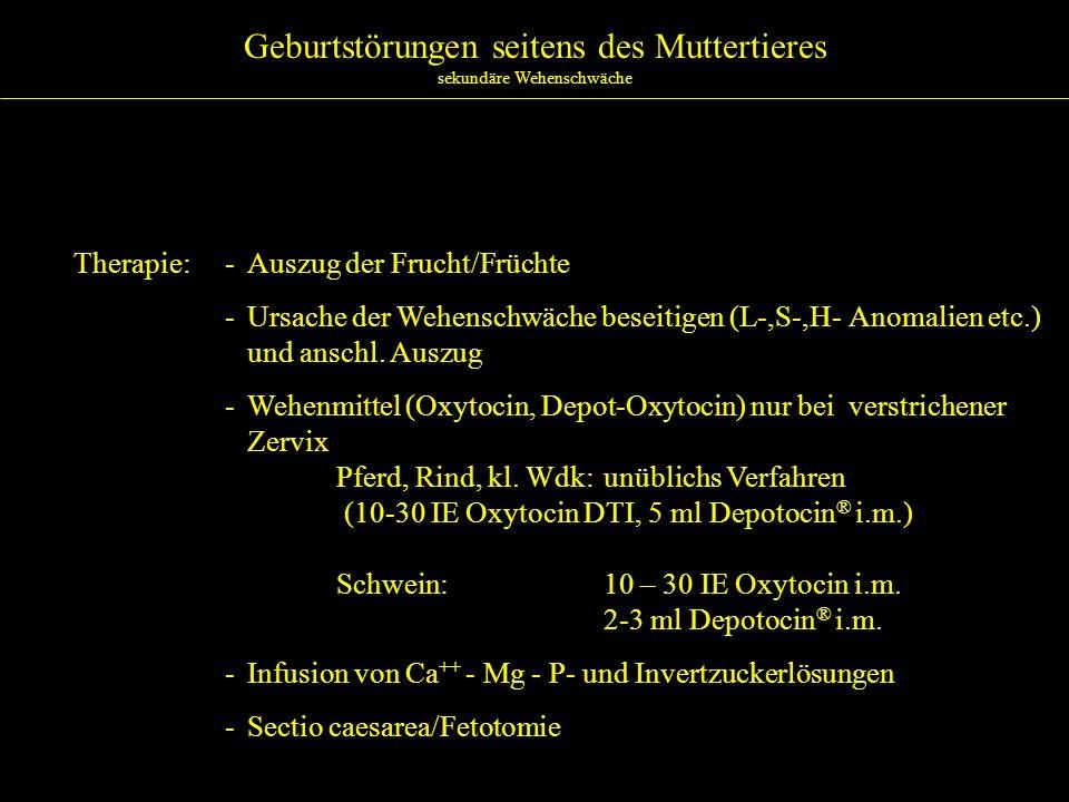 Geburtstörungen seitens des Muttertieres Enge des Zervikalkanals – ungenügende Öffnung Ätiologie:- Rind >> kl.
