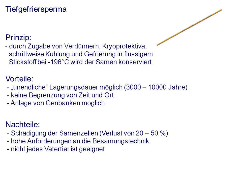 Tiefgefriersperma Prinzip: - durch Zugabe von Verdünnern, Kryoprotektiva, schrittweise Kühlung und Gefrierung in flüssigem Stickstoff bei -196°C wird der Samen konserviert Vorteile: - unendliche Lagerungsdauer möglich (3000 – 10000 Jahre) - keine Begrenzung von Zeit und Ort - Anlage von Genbanken möglich Nachteile: - Schädigung der Samenzellen (Verlust von 20 – 50 %) - hohe Anforderungen an die Besamungstechnik - nicht jedes Vatertier ist geeignet