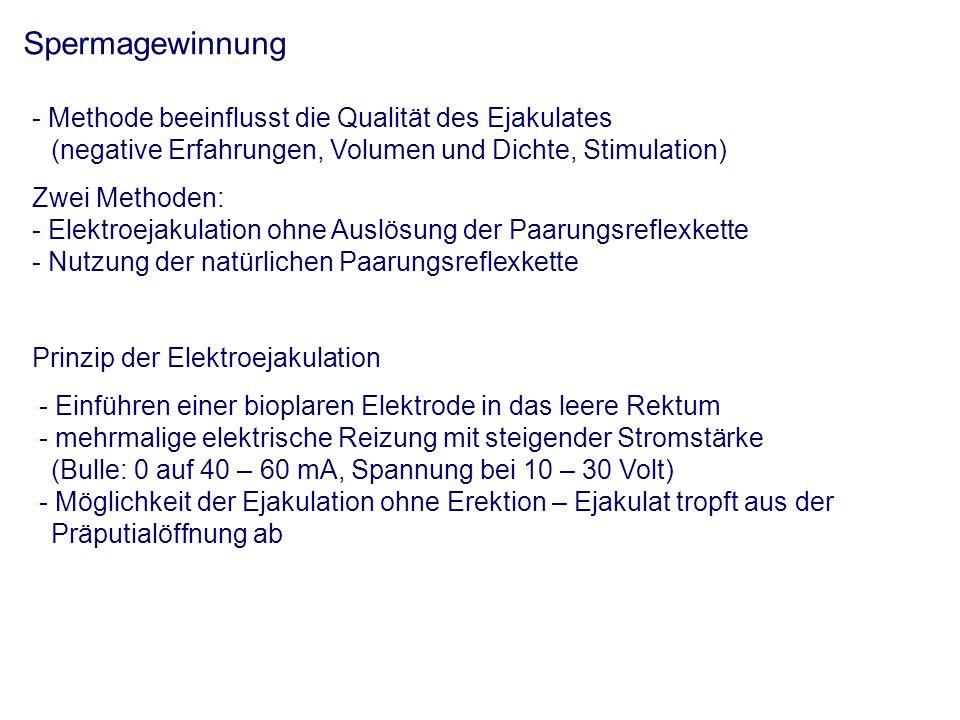 Spermagewinnung - Methode beeinflusst die Qualität des Ejakulates (negative Erfahrungen, Volumen und Dichte, Stimulation) Zwei Methoden: - Elektroejakulation ohne Auslösung der Paarungsreflexkette - Nutzung der natürlichen Paarungsreflexkette Prinzip der Elektroejakulation - Einführen einer bioplaren Elektrode in das leere Rektum - mehrmalige elektrische Reizung mit steigender Stromstärke (Bulle: 0 auf 40 – 60 mA, Spannung bei 10 – 30 Volt) - Möglichkeit der Ejakulation ohne Erektion – Ejakulat tropft aus der Präputialöffnung ab