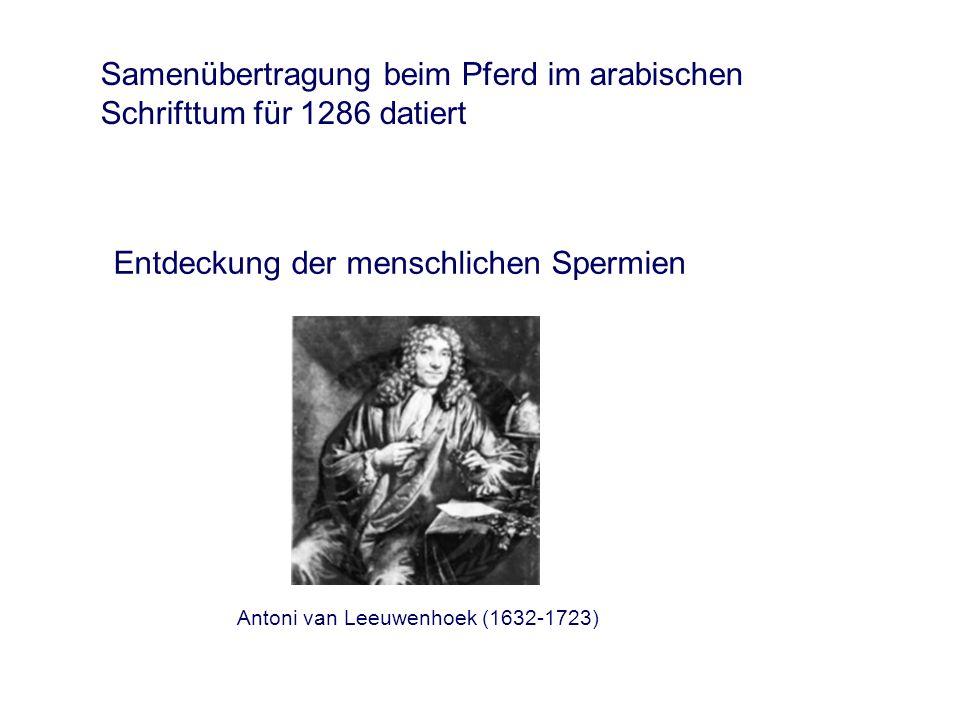 Samenübertragung beim Pferd im arabischen Schrifttum für 1286 datiert Entdeckung der menschlichen Spermien Antoni van Leeuwenhoek (1632-1723)