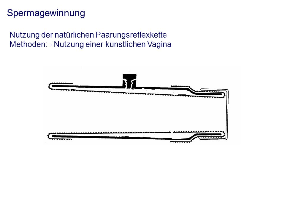 Spermagewinnung Nutzung der natürlichen Paarungsreflexkette Methoden: - Nutzung einer künstlichen Vagina