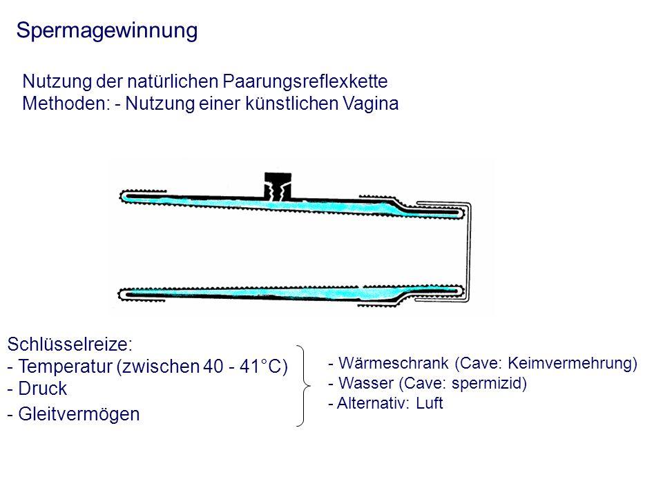 Spermagewinnung Nutzung der natürlichen Paarungsreflexkette Methoden: - Nutzung einer künstlichen Vagina Schlüsselreize: - Temperatur (zwischen 40 - 41°C) - Druck - Gleitvermögen - Wärmeschrank (Cave: Keimvermehrung) - Wasser (Cave: spermizid) - Alternativ: Luft