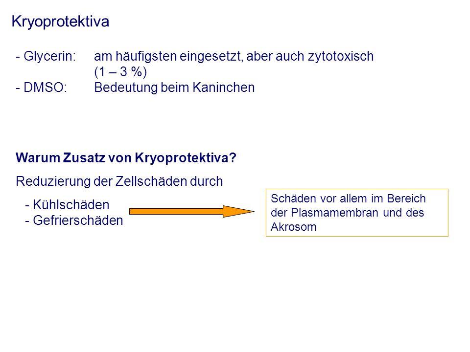 Kryoprotektiva - Glycerin: am häufigsten eingesetzt, aber auch zytotoxisch (1 – 3 %) - DMSO:Bedeutung beim Kaninchen Warum Zusatz von Kryoprotektiva.