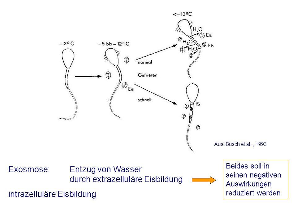 Exosmose: Entzug von Wasser durch extrazelluläre Eisbildung intrazelluläre Eisbildung Aus: Busch et al., 1993 Beides soll in seinen negativen Auswirkungen reduziert werden