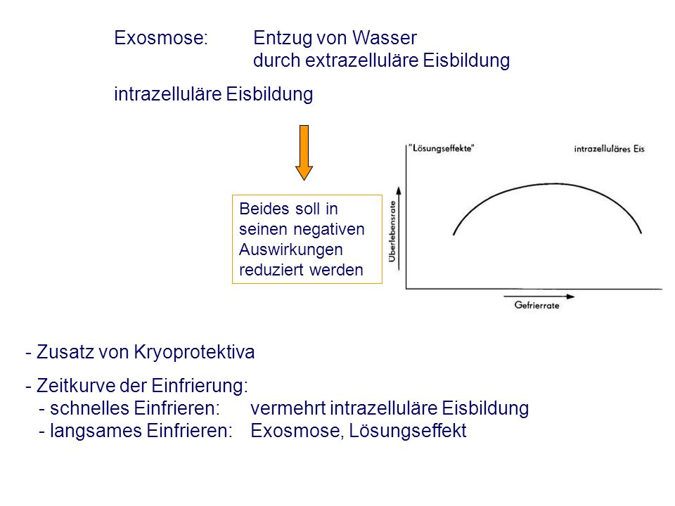 Exosmose: Entzug von Wasser durch extrazelluläre Eisbildung intrazelluläre Eisbildung Beides soll in seinen negativen Auswirkungen reduziert werden - Zusatz von Kryoprotektiva - Zeitkurve der Einfrierung: - schnelles Einfrieren: vermehrt intrazelluläre Eisbildung - langsames Einfrieren:Exosmose, Lösungseffekt