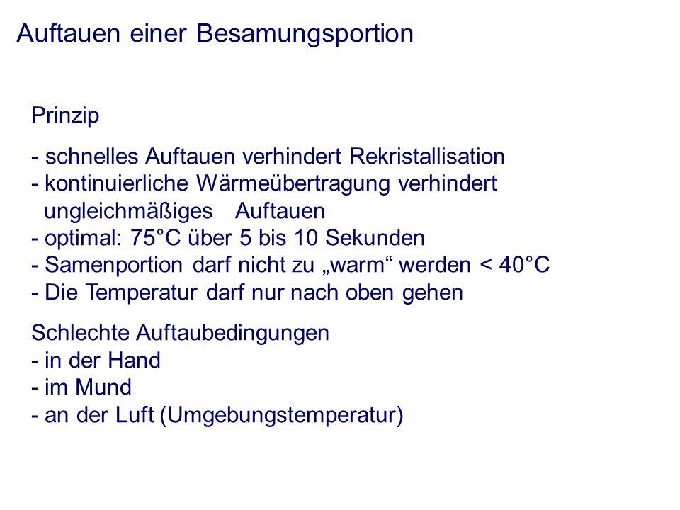 Auftauen einer Besamungsportion Prinzip - schnelles Auftauen verhindert Rekristallisation - kontinuierliche Wärmeübertragung verhindert ungleichmäßiges Auftauen - optimal: 75°C über 5 bis 10 Sekunden - Samenportion darf nicht zu warm werden < 40°C - Die Temperatur darf nur nach oben gehen Schlechte Auftaubedingungen - in der Hand - im Mund - an der Luft (Umgebungstemperatur)