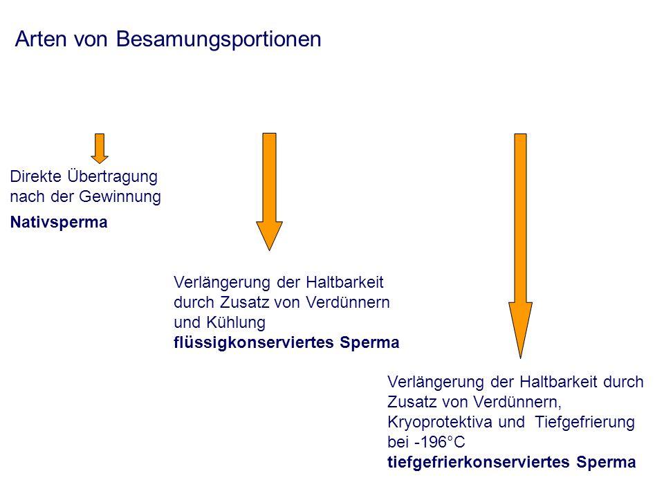 Arten von Besamungsportionen Direkte Übertragung nach der Gewinnung Nativsperma Verlängerung der Haltbarkeit durch Zusatz von Verdünnern und Kühlung flüssigkonserviertes Sperma Verlängerung der Haltbarkeit durch Zusatz von Verdünnern, Kryoprotektiva und Tiefgefrierung bei -196°C tiefgefrierkonserviertes Sperma