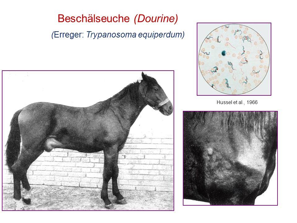 Beschälseuche (Dourine) (Erreger: Trypanosoma equiperdum) Hussel et al., 1966