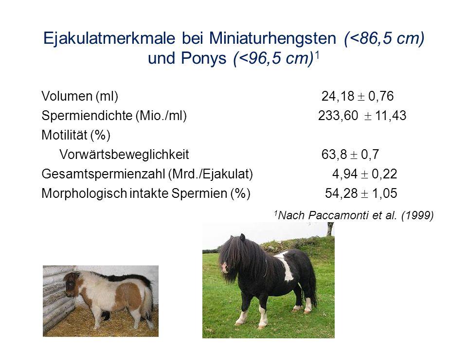 Ejakulatmerkmale bei Miniaturhengsten (<86,5 cm) und Ponys (<96,5 cm) 1 1 Nach Paccamonti et al. (1999) Volumen (ml)24,18 0,76 Spermiendichte (Mio./ml