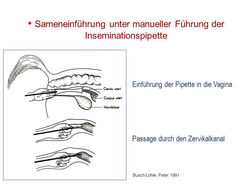 Sameneinführung unter manueller Führung der Inseminationspipette Einführung der Pipette in die Vagina Passage durch den Zervikalkanal Busch/Löhle, Pet