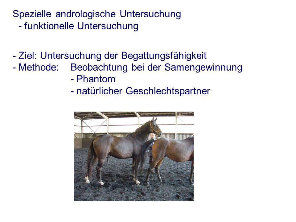 Spezielle andrologische Untersuchung - funktionelle Untersuchung - Ziel: Untersuchung der Begattungsfähigkeit - Methode: Beobachtung bei der Samengewinnung - Phantom - natürlicher Geschlechtspartner
