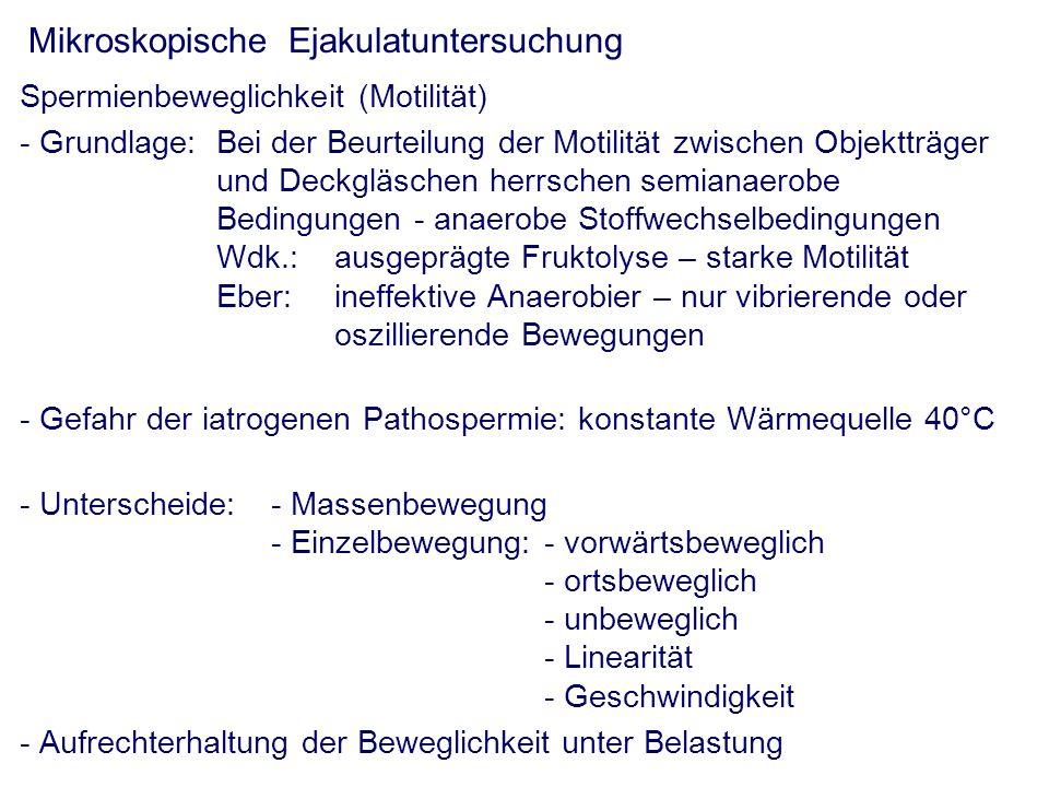 Mikroskopische Ejakulatuntersuchung Spermienbeweglichkeit (Motilität) - Grundlage: Bei der Beurteilung der Motilität zwischen Objektträger und Deckgläschen herrschen semianaerobe Bedingungen - anaerobe Stoffwechselbedingungen Wdk.: ausgeprägte Fruktolyse – starke Motilität Eber:ineffektive Anaerobier – nur vibrierende oder oszillierende Bewegungen - Gefahr der iatrogenen Pathospermie: konstante Wärmequelle 40°C - Unterscheide:- Massenbewegung - Einzelbewegung:- vorwärtsbeweglich - ortsbeweglich - unbeweglich - Linearität - Geschwindigkeit - Aufrechterhaltung der Beweglichkeit unter Belastung