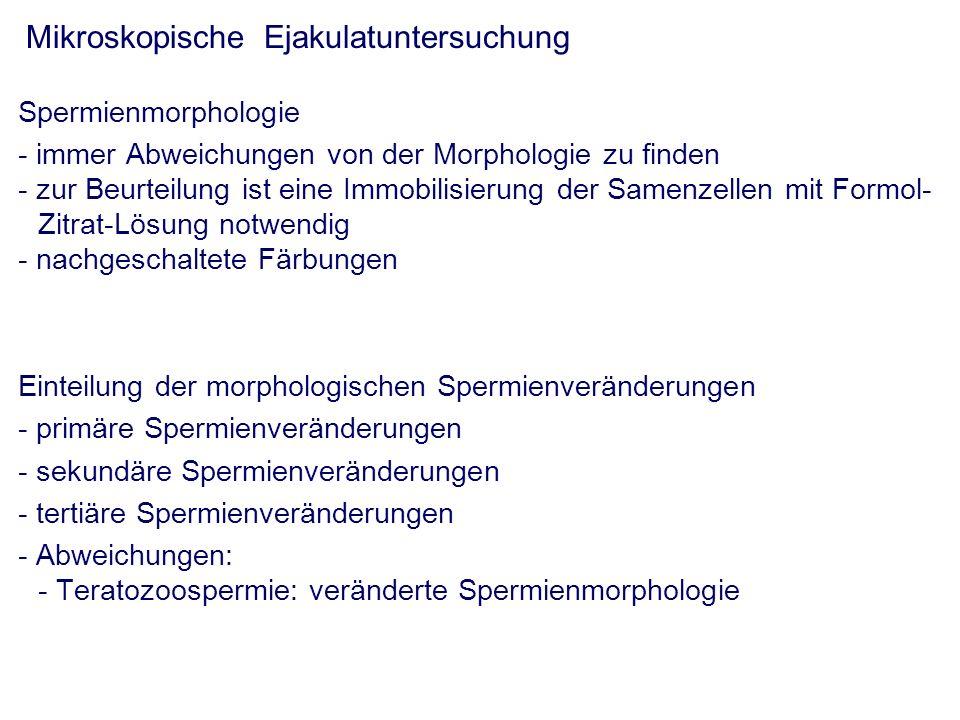 Mikroskopische Ejakulatuntersuchung Spermienmorphologie - immer Abweichungen von der Morphologie zu finden - zur Beurteilung ist eine Immobilisierung der Samenzellen mit Formol- Zitrat-Lösung notwendig - nachgeschaltete Färbungen Einteilung der morphologischen Spermienveränderungen - primäre Spermienveränderungen - sekundäre Spermienveränderungen - tertiäre Spermienveränderungen - Abweichungen: - Teratozoospermie: veränderte Spermienmorphologie