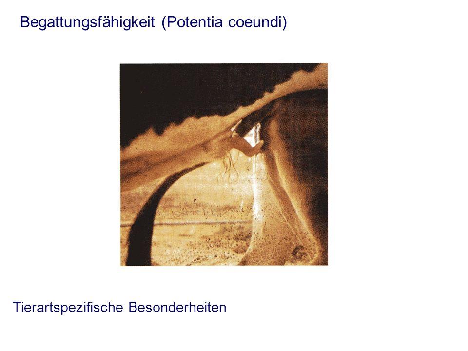 Tierartspezifische Besonderheiten Begattungsfähigkeit (Potentia coeundi)
