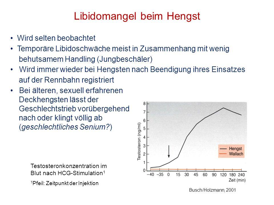 Libidomangel beim Hengst Wird selten beobachtet Temporäre Libidoschwäche meist in Zusammenhang mit wenig behutsamem Handling (Jungbeschäler) Wird imme