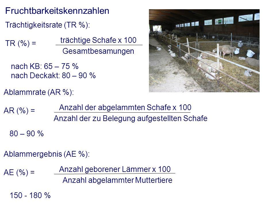Fruchtbarkeitskennzahlen Trächtigkeitsrate (TR %): TR (%) = nach KB: 65 – 75 % nach Deckakt: 80 – 90 % trächtige Schafe x 100 Gesamtbesamungen Ablammrate (AR %): AR (%) = 80 – 90 % Anzahl der abgelammten Schafe x 100 Anzahl der zu Belegung aufgestellten Schafe Ablammergebnis (AE %): AE (%) = 150 - 180 % Anzahl geborener Lämmer x 100 Anzahl abgelammter Muttertiere