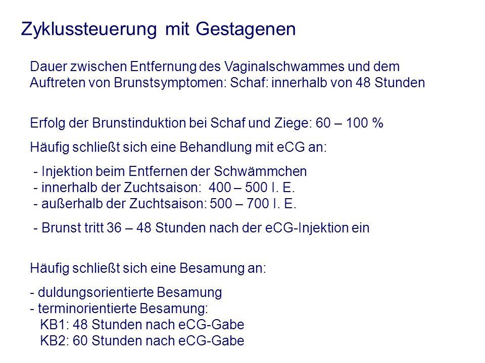 Zyklussteuerung mit Gestagenen Dauer zwischen Entfernung des Vaginalschwammes und dem Auftreten von Brunstsymptomen: Schaf: innerhalb von 48 Stunden E