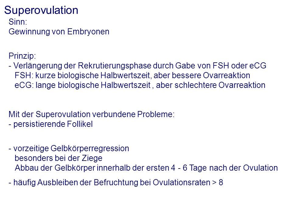 Superovulation Sinn: Gewinnung von Embryonen Prinzip: - Verlängerung der Rekrutierungsphase durch Gabe von FSH oder eCG FSH: kurze biologische Halbwer