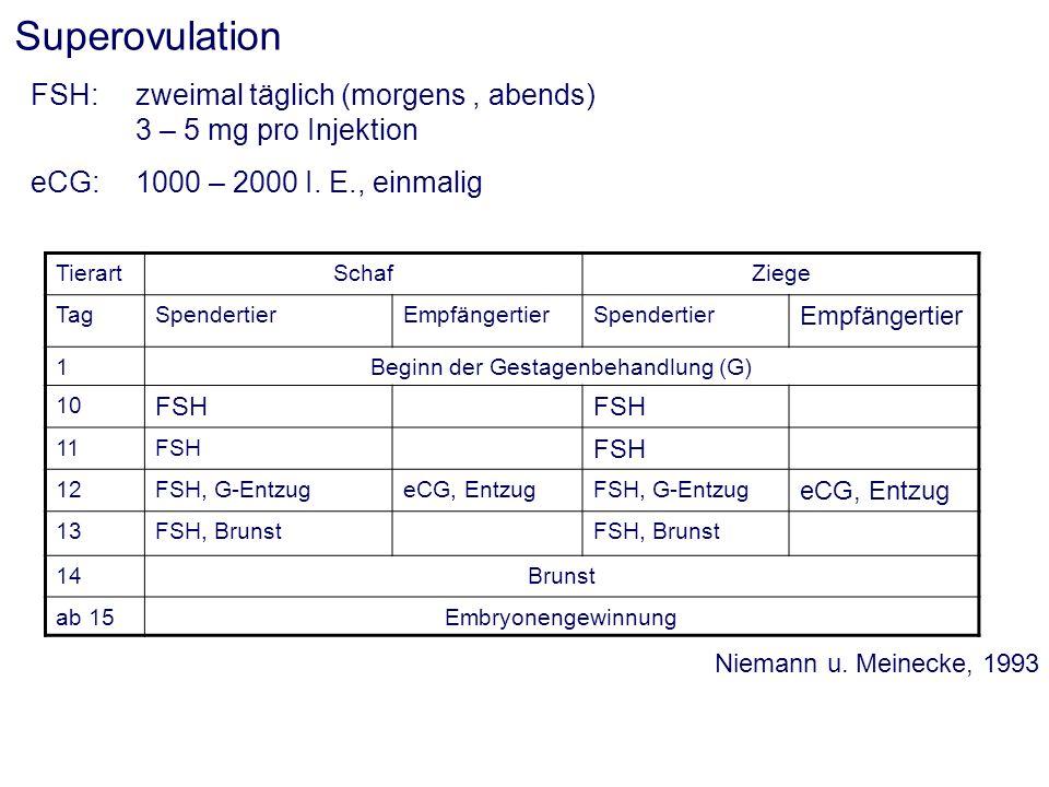 Superovulation FSH: zweimal täglich (morgens, abends) 3 – 5 mg pro Injektion eCG:1000 – 2000 I. E., einmalig TierartSchafZiege TagSpendertierEmpfänger