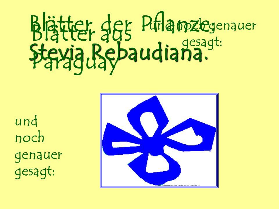 Blätter der Pflanze: Stevia Rebaudiana. Blätter aus Paraguay und noch genauer gesagt: