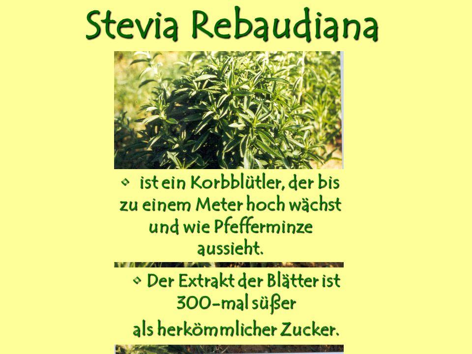 Stevia Rebaudiana ist ein Korbblütler, der bis zu einem Meter hoch wächst und wie Pfefferminze aussieht. ist ein Korbblütler, der bis zu einem Meter h
