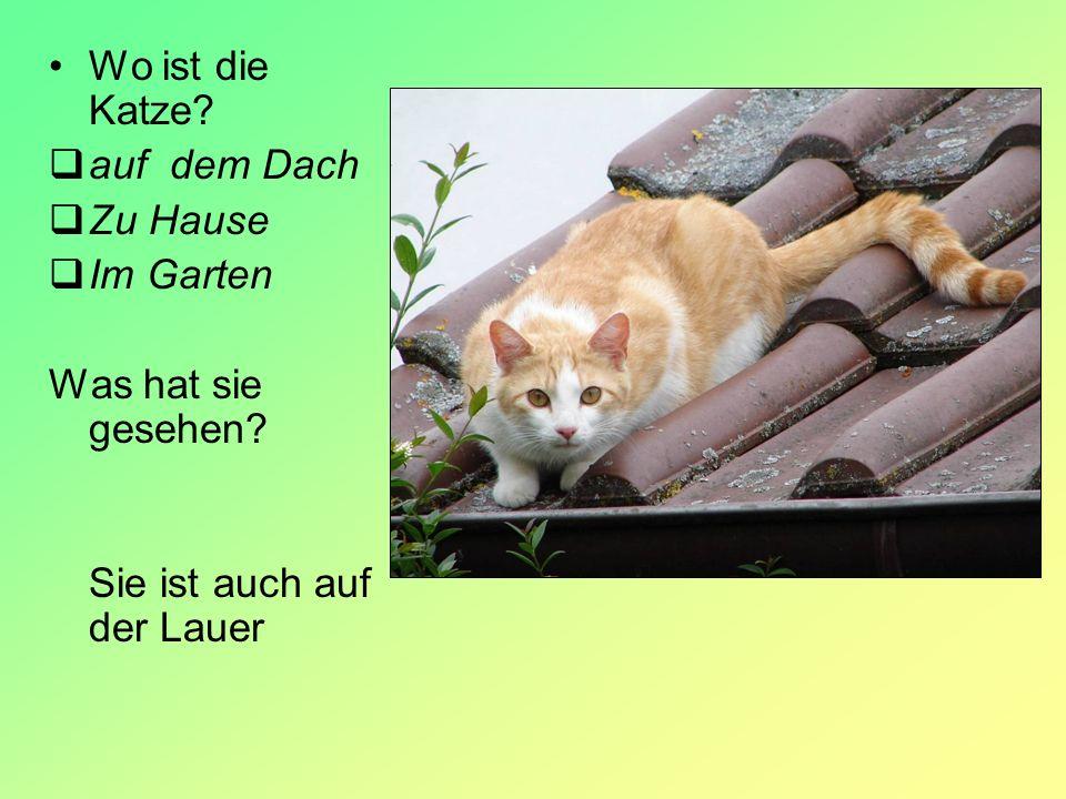 Wo ist die Katze? auf dem Dach Zu Hause Im Garten Was hat sie gesehen? Sie ist auch auf der Lauer