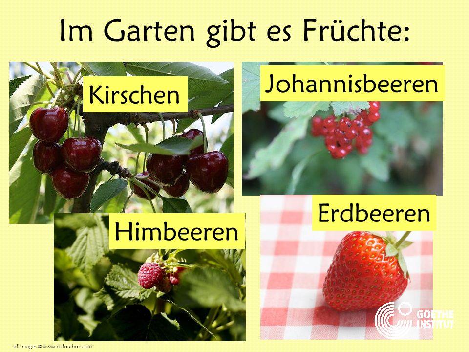 Im Garten gibt es Früchte: Kirschen Johannisbeeren Himbeeren Erdbeeren all images ©www.colourbox.com