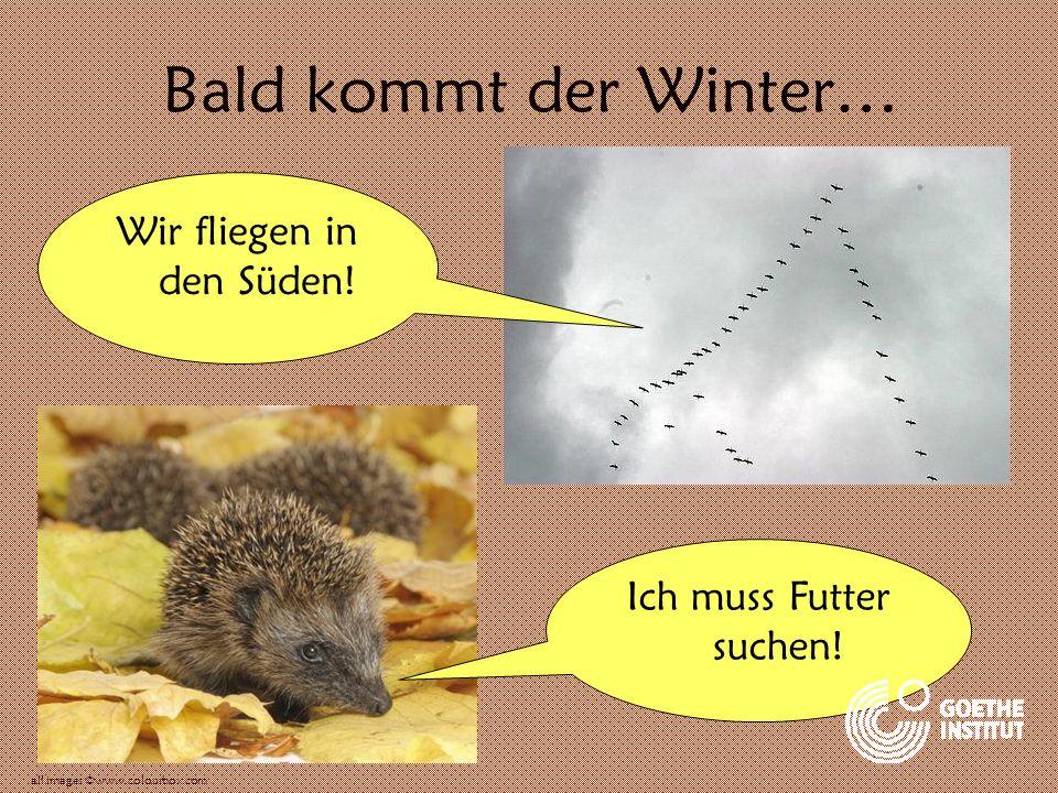 Bald kommt der Winter… Wir fliegen in den Süden! Ich muss Futter suchen! all images ©www.colourbox.com